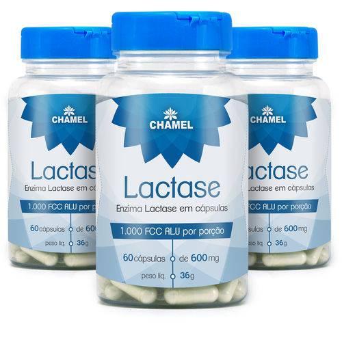 Descubra para que serve e como usar a lactase em cápsulas