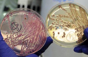 10 milhões de mortes poderão ser atribuídas a antibióticos em 2050, diz estudo