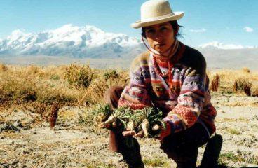 Maca Peruana e seus benefícios – Como consumir (cápsulas e sucos)